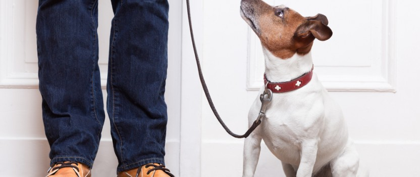 Obedience Training for Dogs Offers a Variety of Benefits