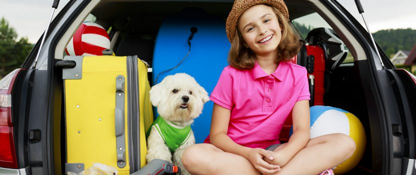Dog Training for Safe and Happy Traveling