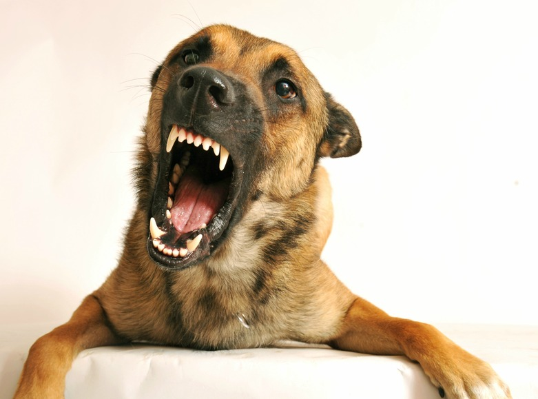 Stop Your Dog From Playful Biting
