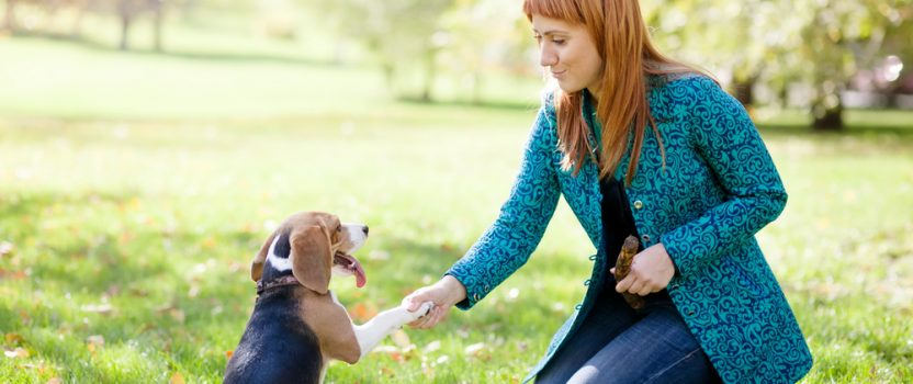 The Importance of Decision-Making in Dog Training