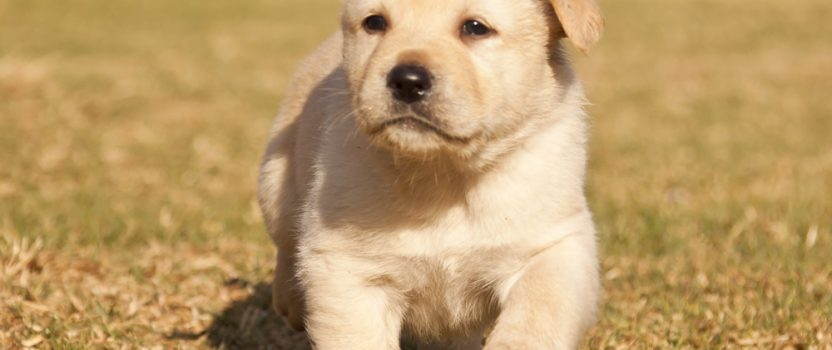 When – and How – to Start Puppy Training