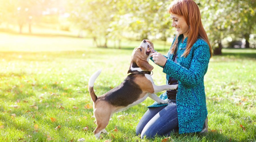 Is Off-Leash Training Possible for Your Dog?