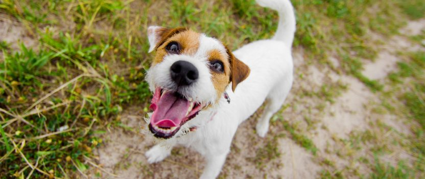 Does Your Dog Bark Excessively? Here's What to Do