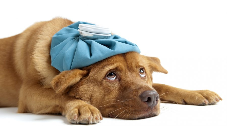 Dog Trainers Encourage Awareness of Canine Flu Outbreak