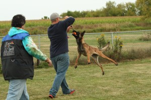 Dog Training Salt Lake City