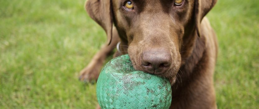 Is Dog Training More Helpful for Some Breeds than Others?