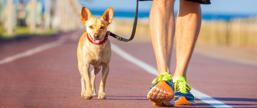 Dog Training Basics: The Structured Walk