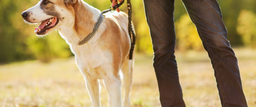The 3 Best Gifts Puppy Boot Camp Offers You & Your Pet
