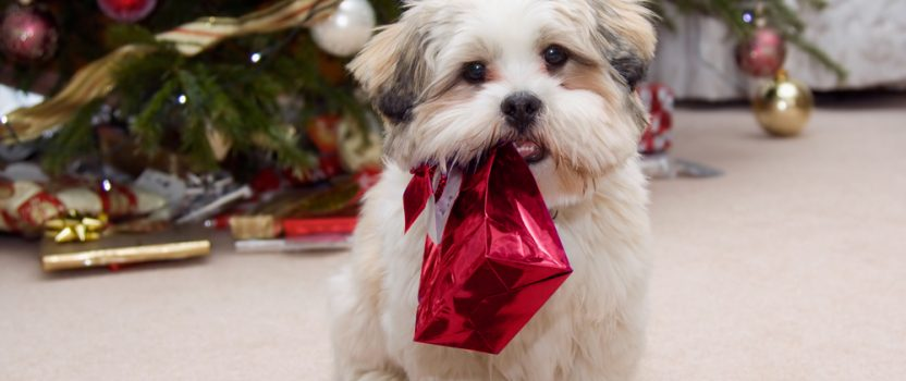 Give the Gift of Pet Training this Holiday Season
