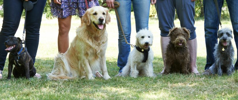 Can Aggressive Dog Training Help You?