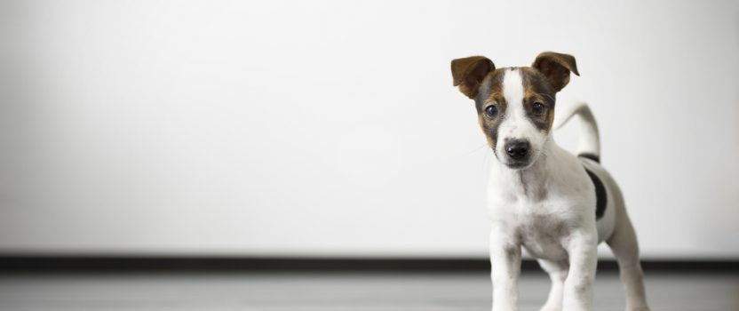 Boost Dog Training Success by Understanding Calming Signals