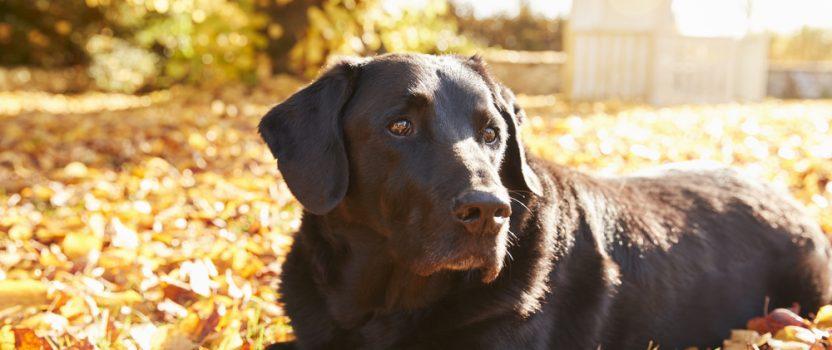 Dog Training for Senior Dogs