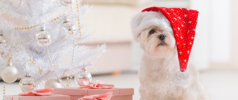 Give the Gift of Dog Training for the Holidays