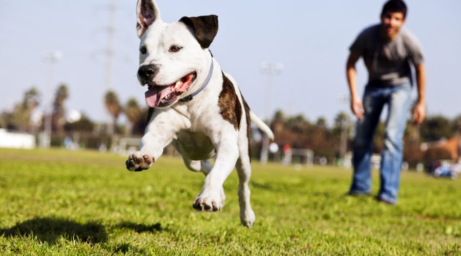 Ask the Dog Trainer: Why Is My Dog Afraid of Men?